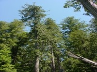 best trees for reforestation